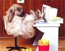 Nyúl ül a számítógép előtt