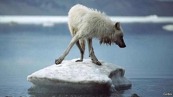 Északi-sarkvidék